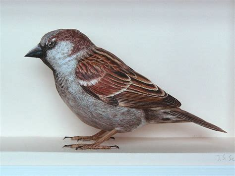 Realistic Birds Made from Paper and Watercolor Paint by