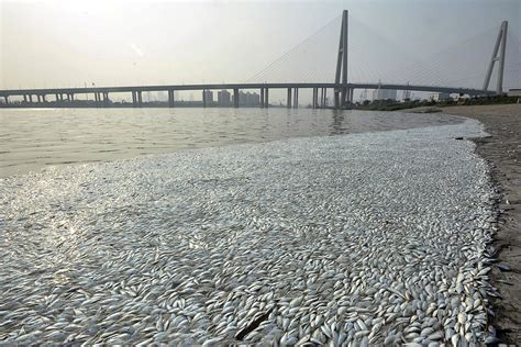 Tianjin explosion: Thousands of dead fish raise fears of